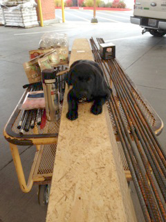 Harmony Design and Build - contractor dog